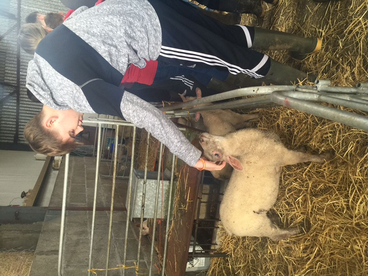5th Year Agricultural Science Visit Coorevin Farm St